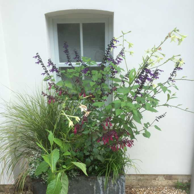 Stable Courtyard Pots